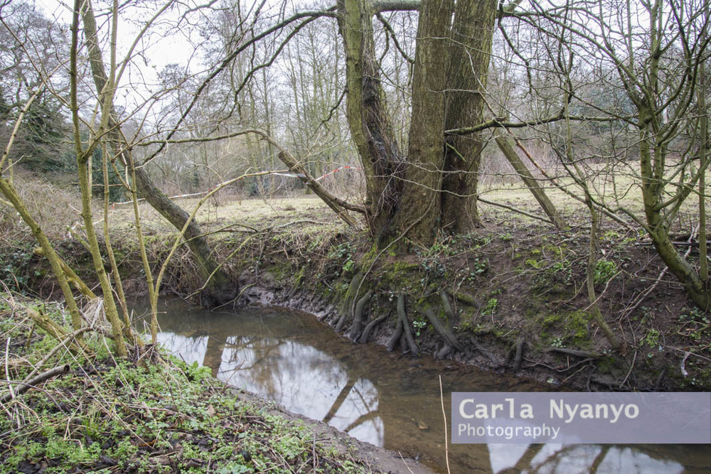 river_sherbourne-172.jpg