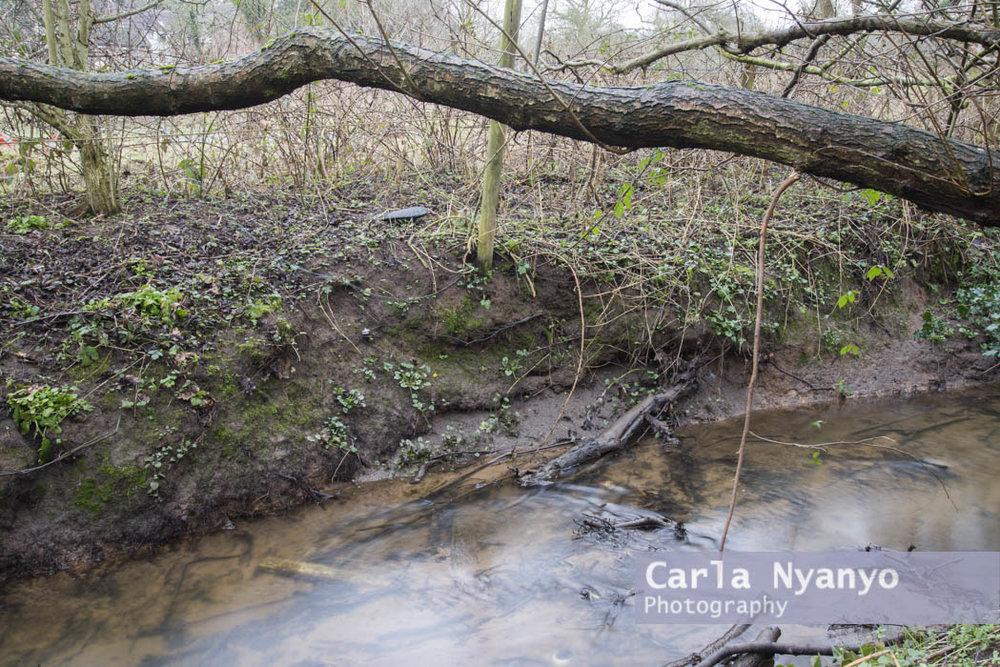river_sherbourne-173.jpg