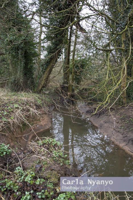 river_sherbourne-177.jpg