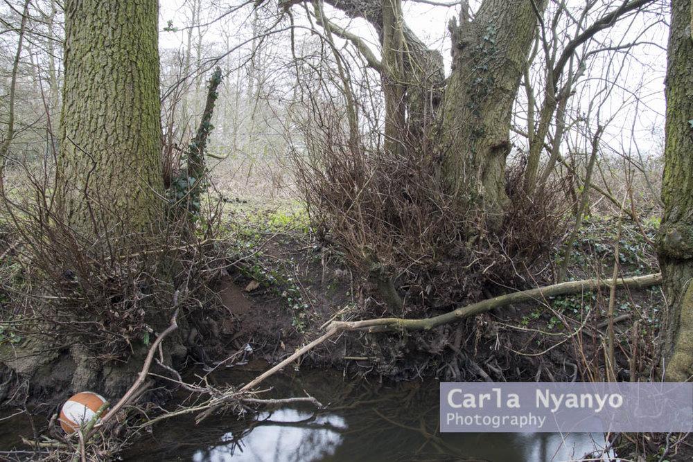 river_sherbourne-183.jpg