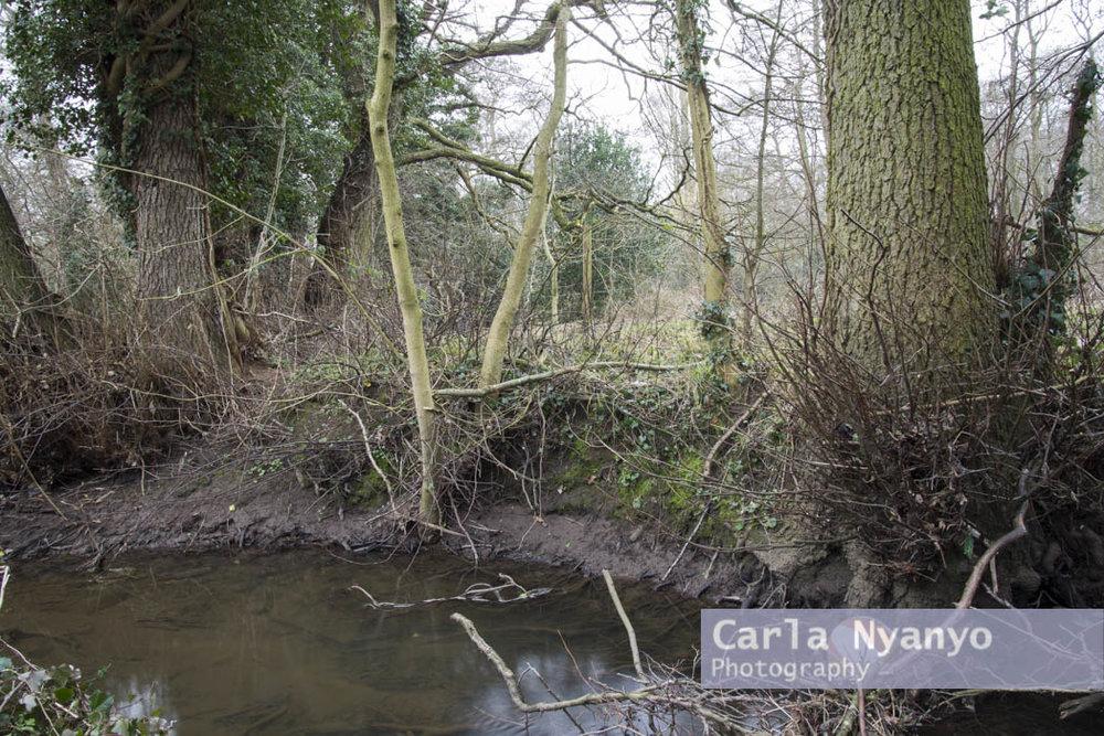 river_sherbourne-184.jpg