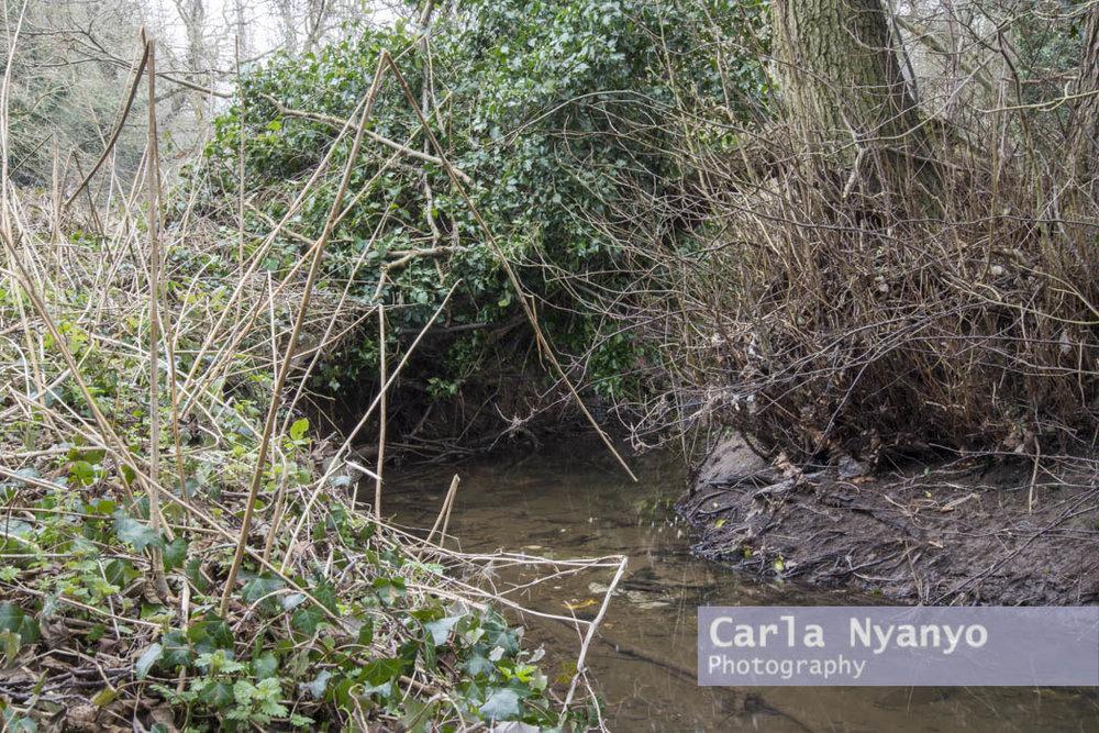 river_sherbourne-185.jpg