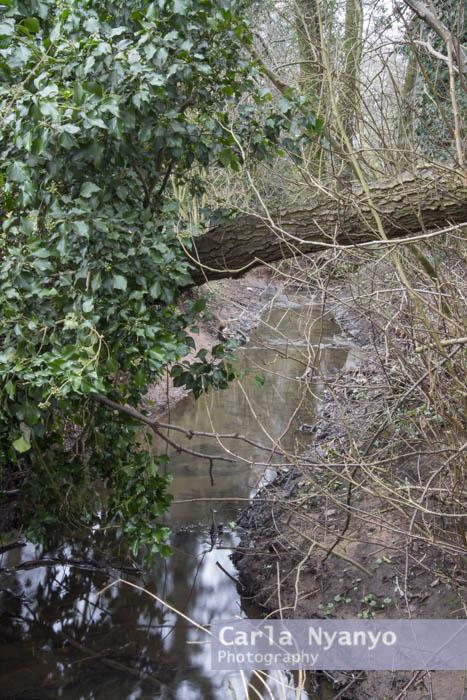 river_sherbourne-186.jpg