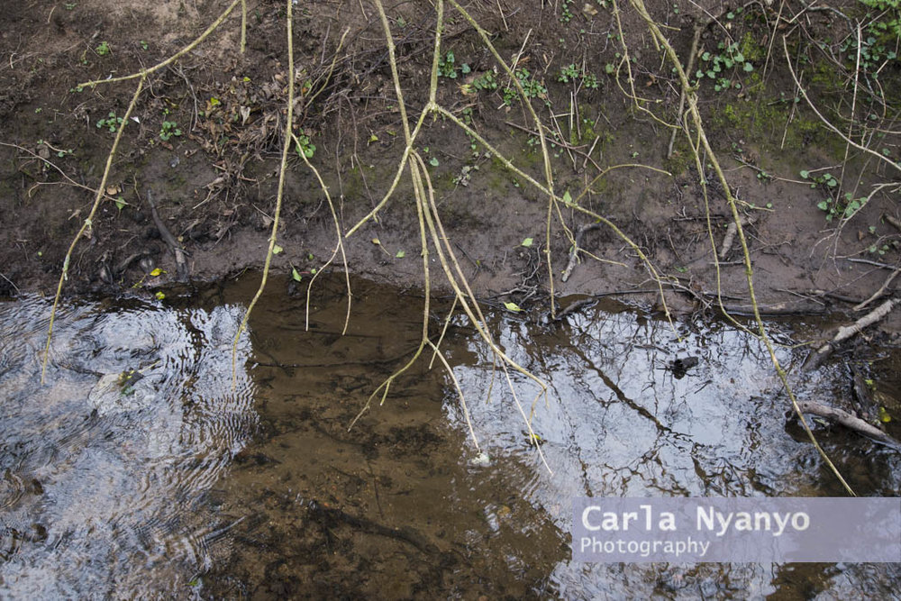 river_sherbourne-188.jpg