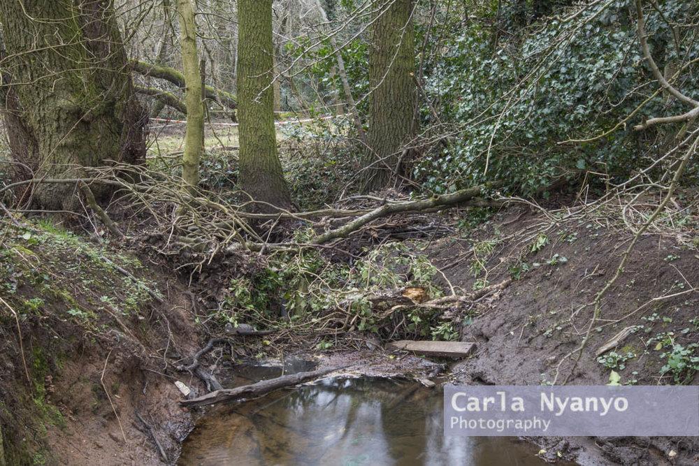 river_sherbourne-189.jpg