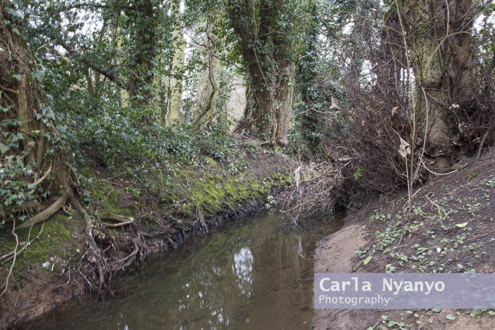 river_sherbourne-192.jpg