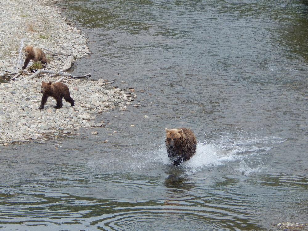 Bear-viewing