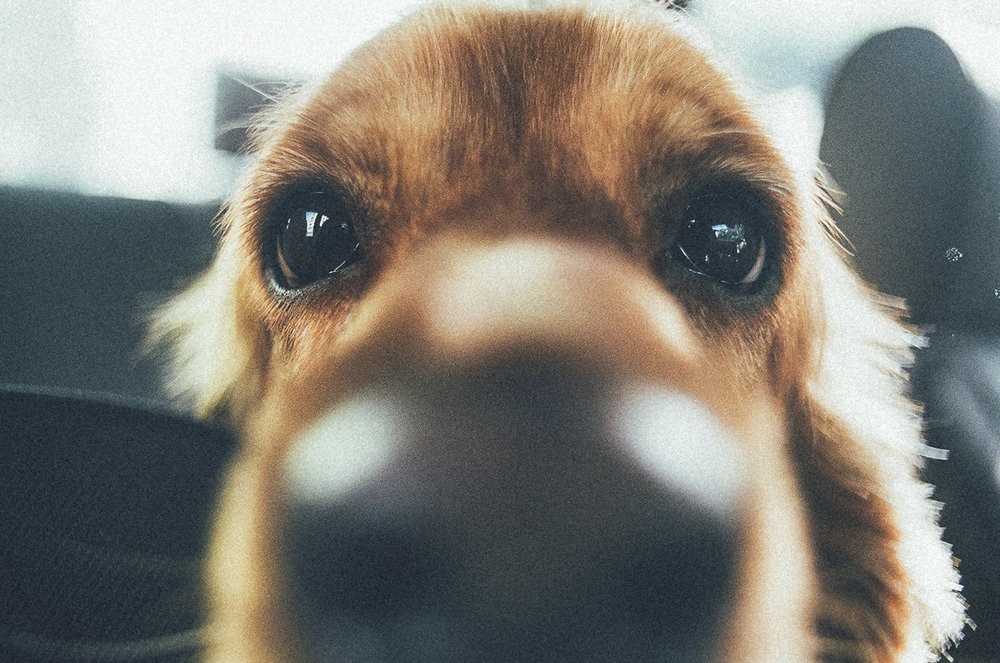 Sniffing the Lens