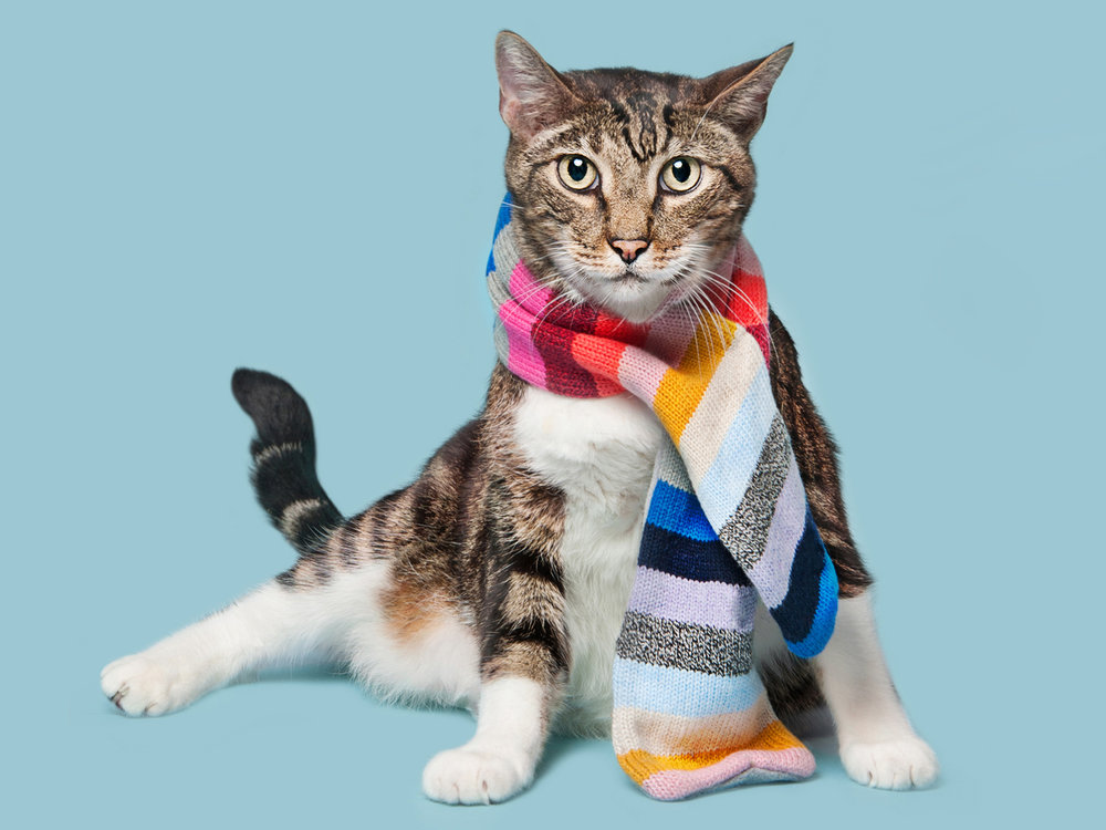 Paola-Paladini-Studio-Cat-with-Scarf