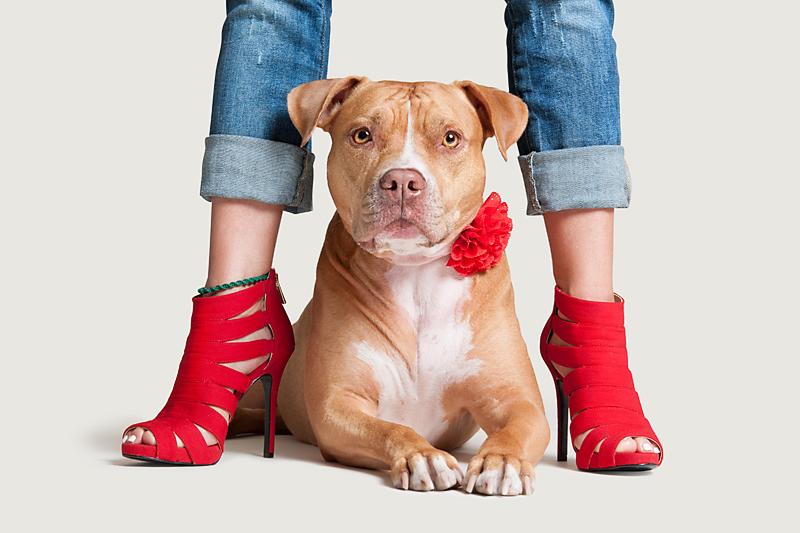 me-and-my-human-mom-heels-and-pitbull