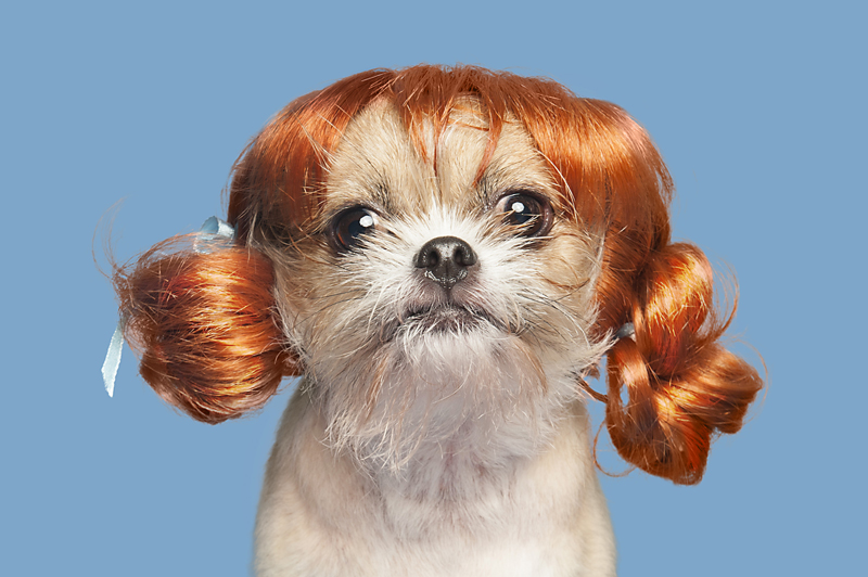 Wig-gles-dog-and-wig-puppy.jpg
