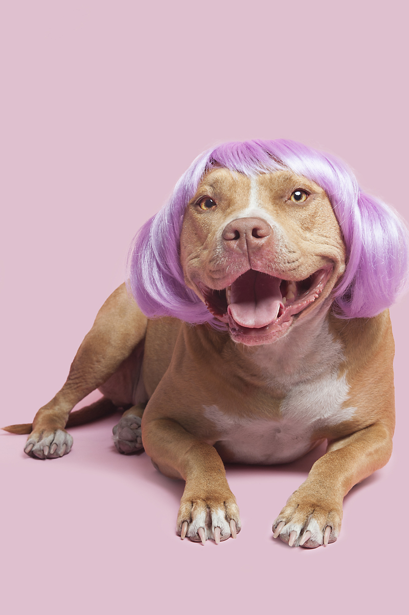Wig-gles-dog-and-wig-red-pitbull.jpg
