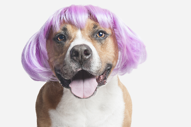 Wig-gles-dog-and-wig-smiling-pitbull.jpg