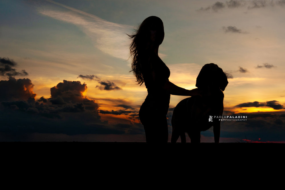 Paola-Paladini-Sunset-Silhouettes-Dog-Bloodhound-four