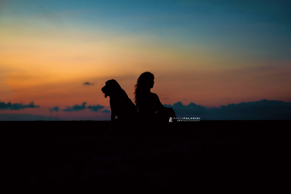 Paola-Paladini-Sunset-Silhouettes-Dog-Bloodhound-two