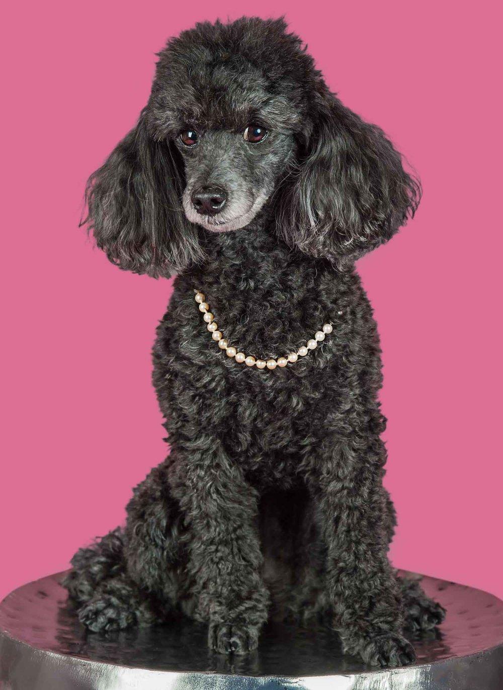Paola-Paladini-Studio-Black-Poddle-Pearls