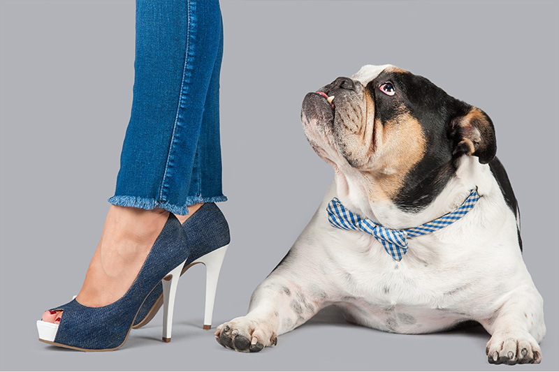 Paola-Paladini-Hounds-and-Heels-english-bulldog-jeans.jpg