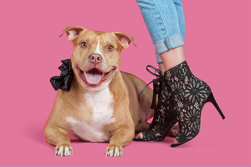 Paola-Paladini-Hounds-and-Heels-pitbull-pink.jpg.jpg