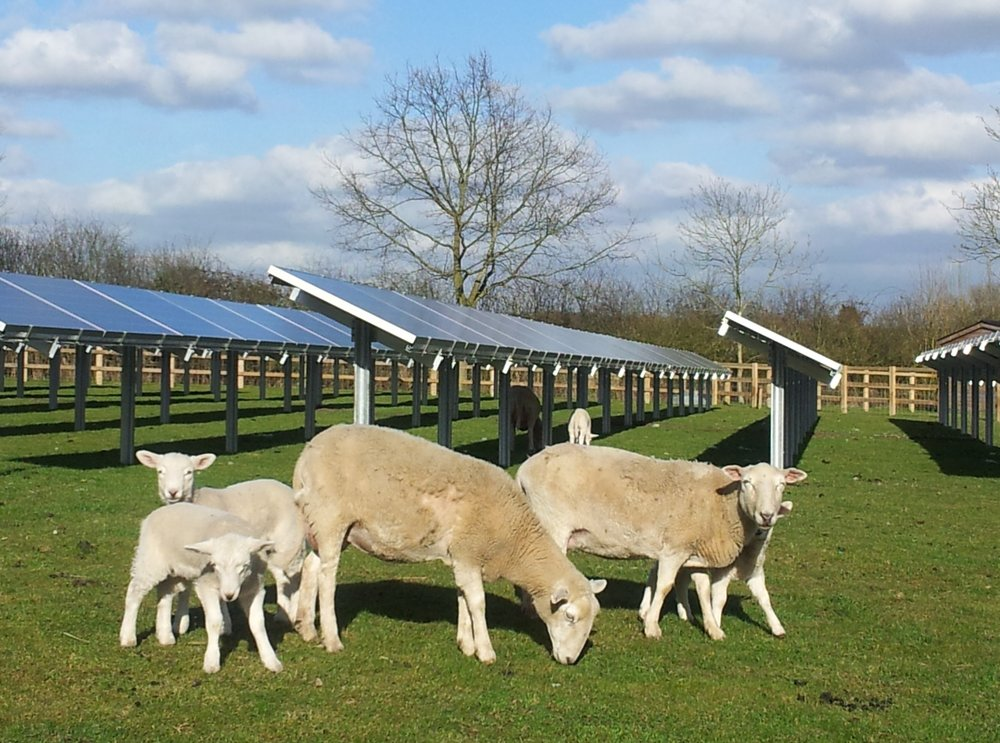 grazing-solar.jpg