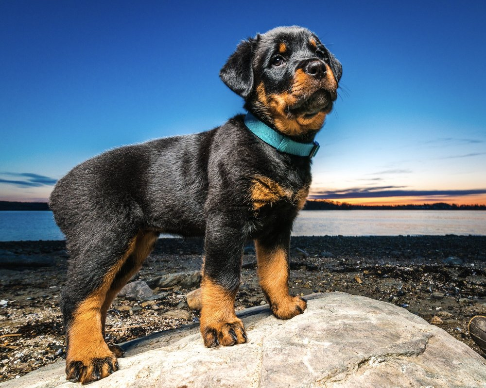 Maine Pet Photographer | Wag Studios