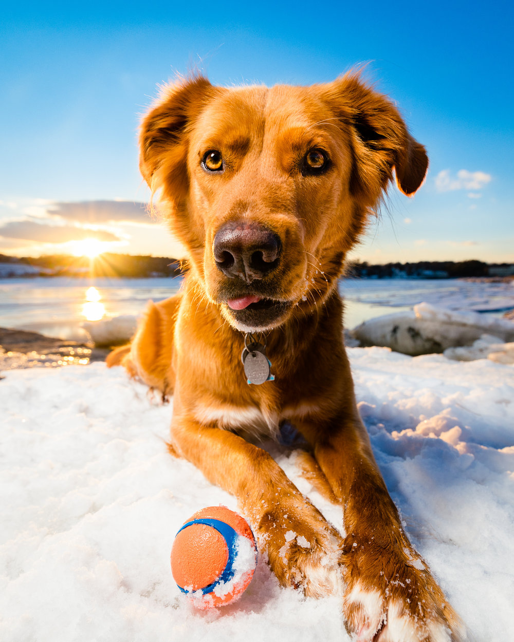 Maine dog photography | Wag Studios