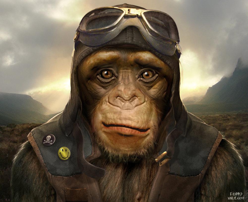 chimp04.jpg