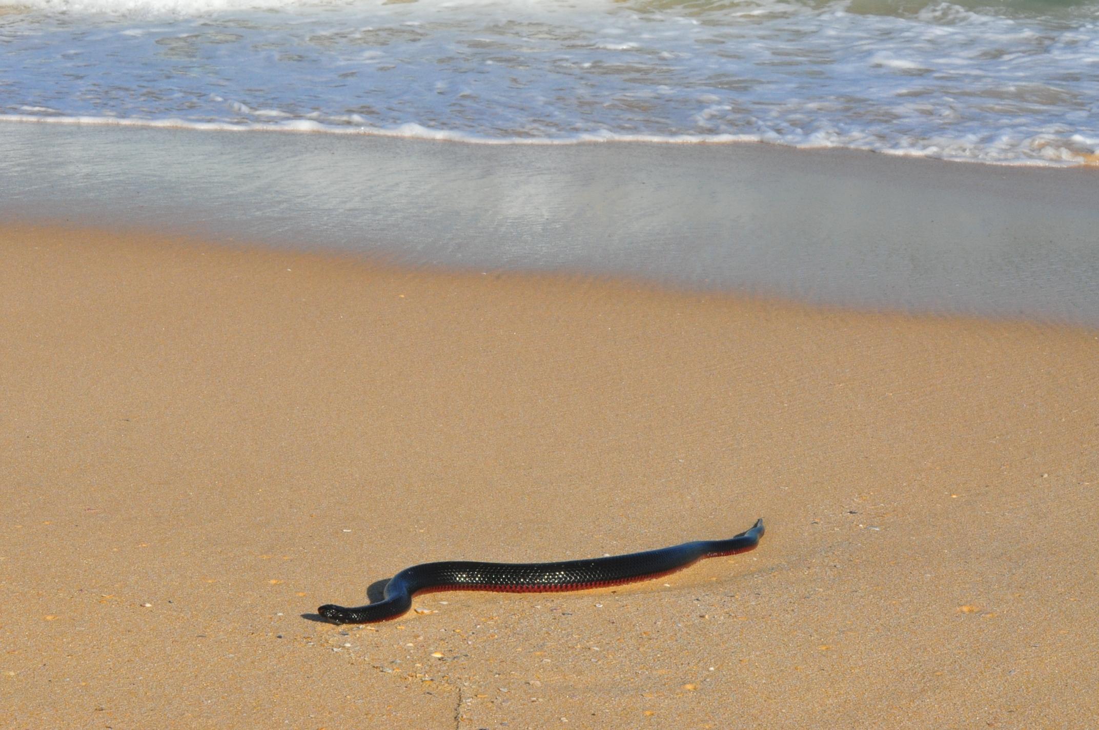 Surfing Snake