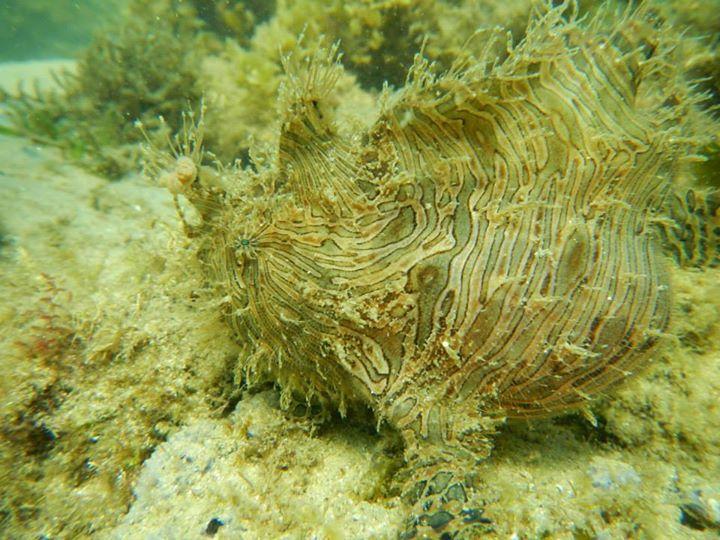 Angler fish off Bar Beach Merimbula