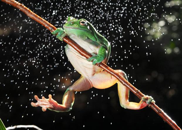 frog-rain_1794306i1.jpg