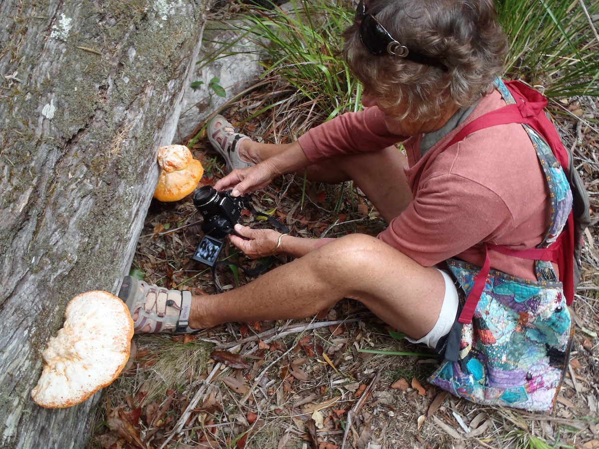 Liz gets right down to her fungi recording