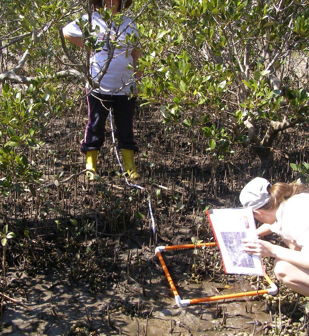 172-mangrovesaltmarsh-031.jpg