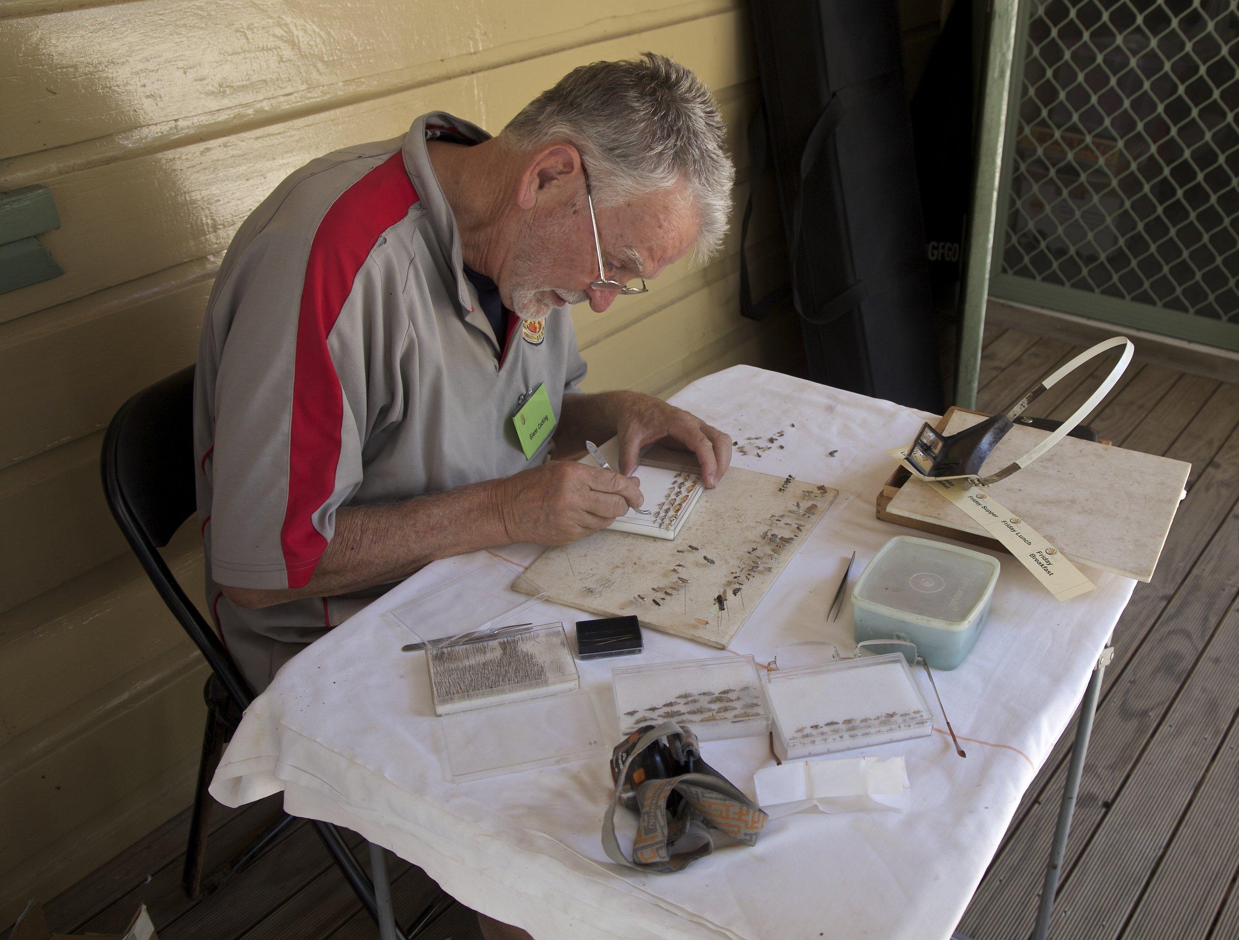 Glenn preparing specimens for ID at the Wallagoot BioBlitz 2015