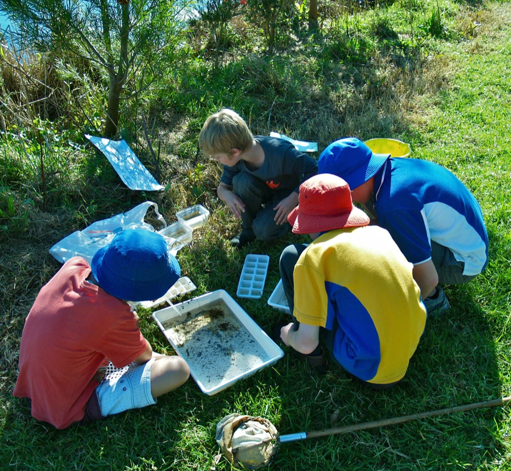 BioBlitz waterbug survey