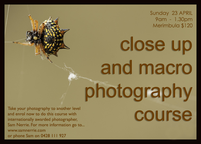 This close-up adn macro photography course will examine how to bring out the best in your little creature or flower. Take stunning photos of the micro world of creatures with great tuition from internationally awarded phtographer, Sam Nerrie. Courses running on the Sapphire Coast and Canberra.