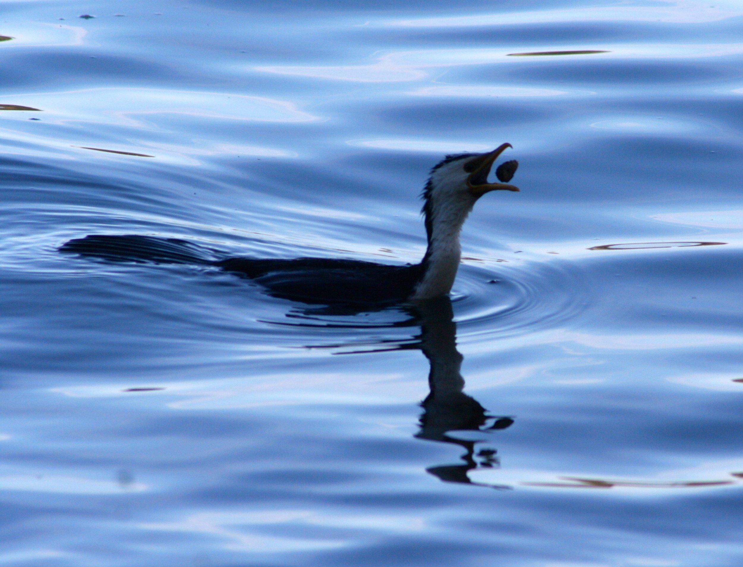 boardwalk-bird