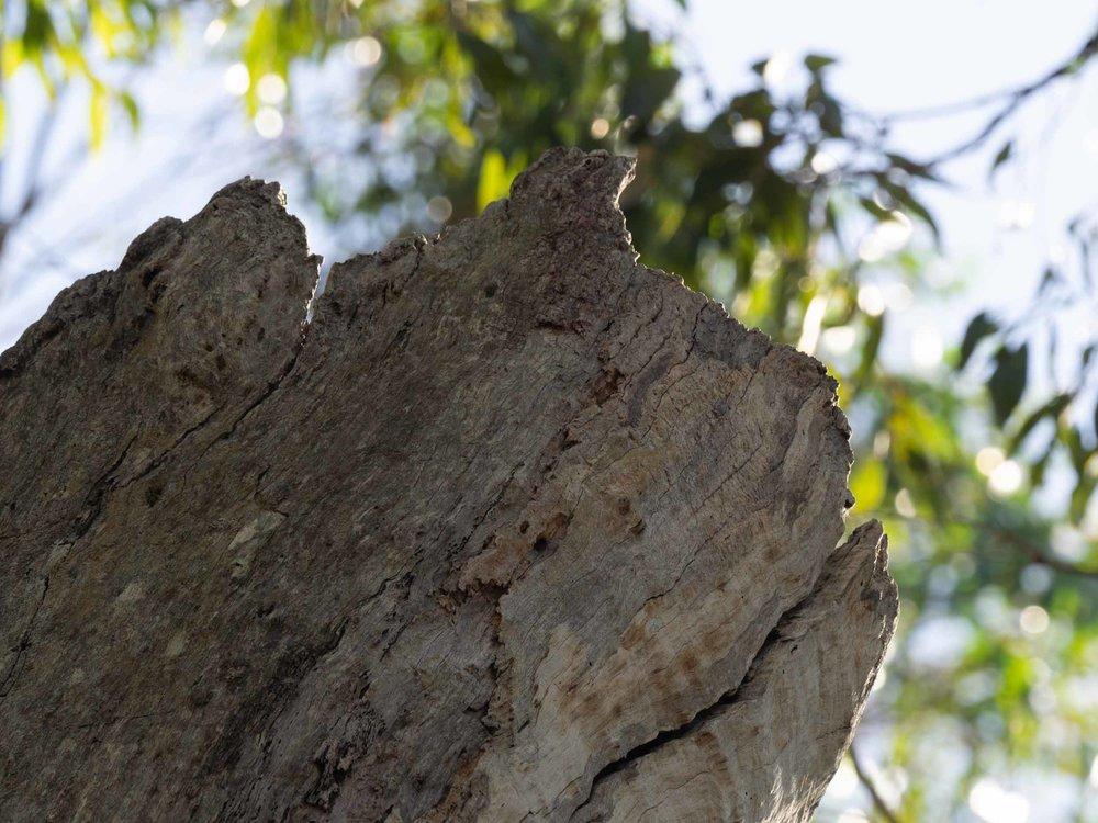 open, hollow trunk of dead tree