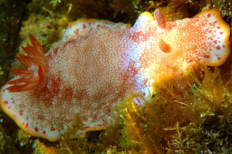 Sea Slug Census - Spring & Autumn, annually