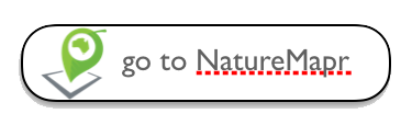 go to NatureMapr.png