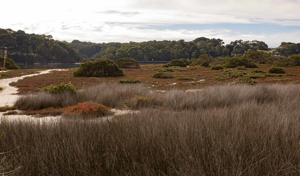 Coastal Saltmarsh, Bermagui, NSW