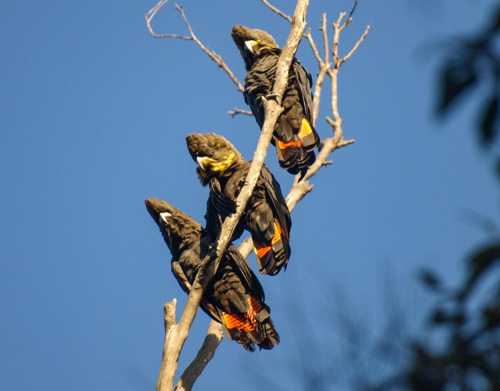 family (male at top)