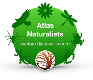 click logo to return to Atlas Naturalists home page