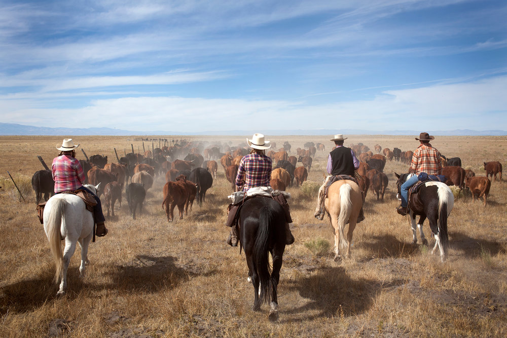 10.17.14 Zapata-Anna Elledge-Cattle-Horses-Cowboys.JPG