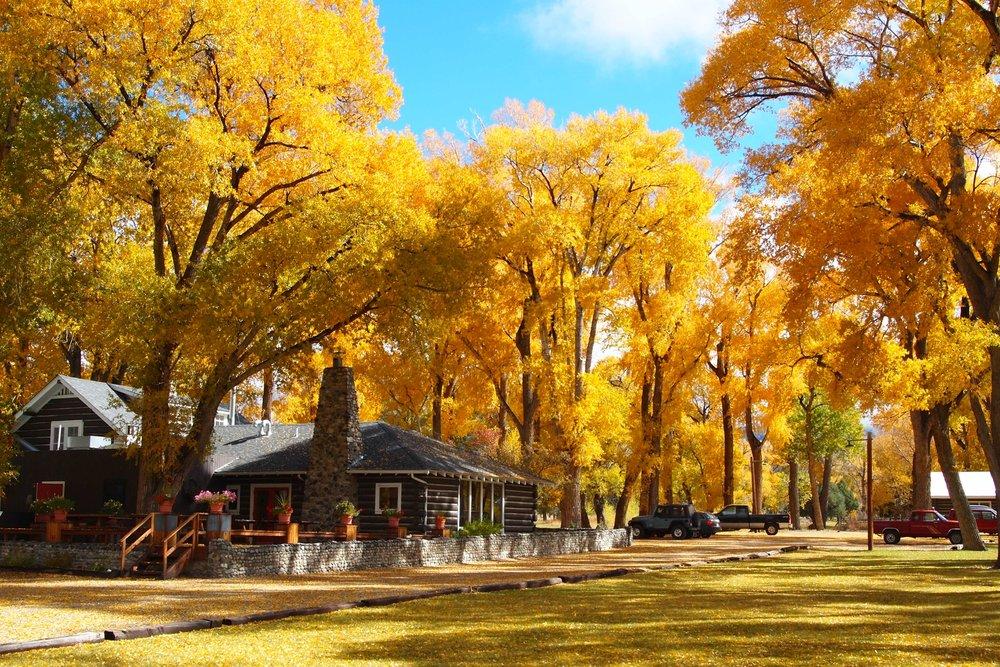 fall colors at the lodge.JPG