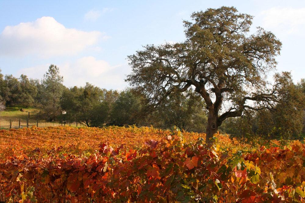 fall-colors-jarrod-lyman.jpg