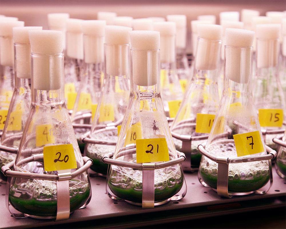100316_Joule-biotechnologies_116.jpg