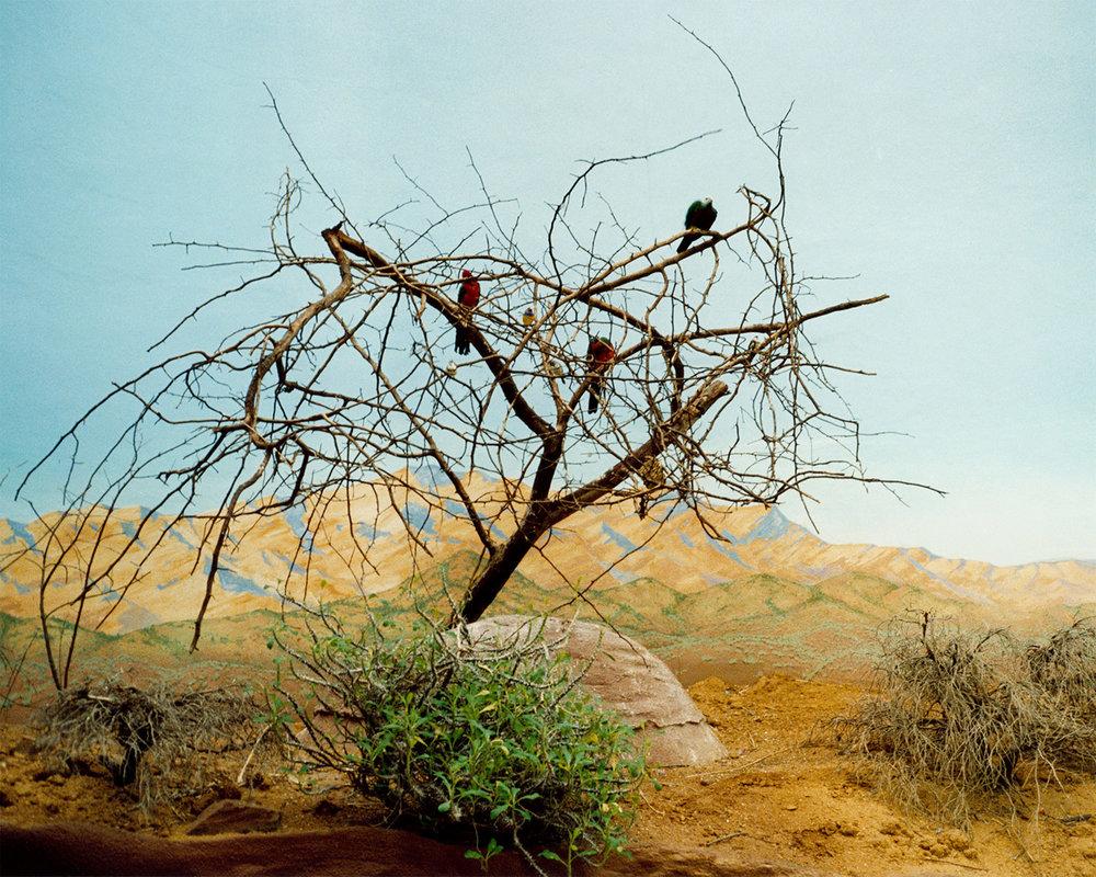 birds-zoo.jpg