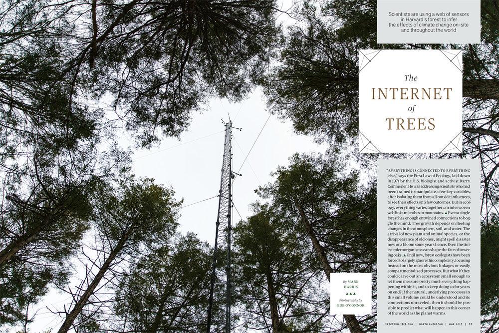 IEEE-Harvard-forest.jpg
