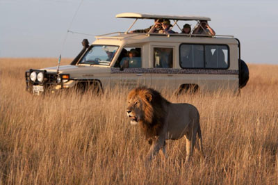Although Cape Town is quite a modern city, it's possible to visit private safaris that take you out to the wild with lions, rhinos, giraffes, zebras and many more.