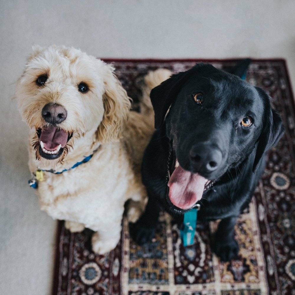 Dog Sitting - We maintain a network of fully insured and trained dog care professionals in SF with dog friendly homes that love to provide a cage-free Bed & Breakfast experience for guest pups.Learn more ➝
