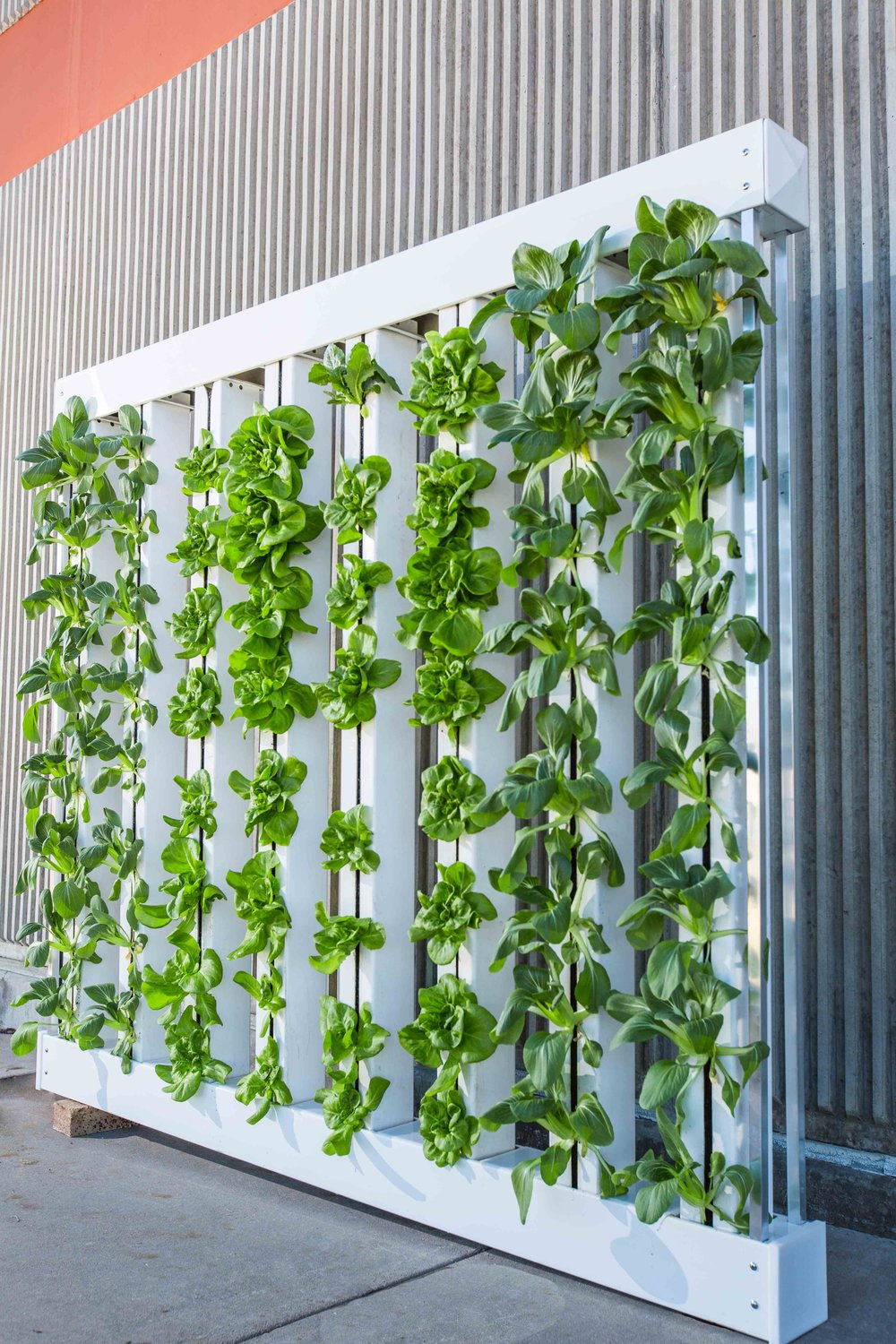 vertical-farm-916337.jpg